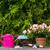 osier · panier · jardin · outils · herbe · nature - photo stock © fotoaloja