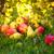 pluie · gouttes · herbe · feuille · saison · d'automne · eau - photo stock © fotoaloja