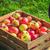 oogst · appels · karton · rijp · gala - stockfoto © fotoaloja