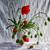 pipacsok · égbolt · természet · tavasz · fű · levél - stock fotó © fotoaloja