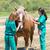 veterinary horses on the farm stock photo © fotoedu
