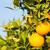 frutta · fiore · messa · a · fuoco · selettiva · arancione · verde - foto d'archivio © fotoedu