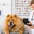 ветеринарный · клинике · медсестры · лаборатория · женщины · животного - Сток-фото © fotoedu