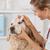 ветеринарный · клинике · капли · глаза · собака - Сток-фото © fotoedu