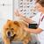 ветеринарный · клинике · вакцина · собака · врач · больницу - Сток-фото © fotoedu