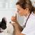állatorvosi · klinika · francia · bulldog · vakcina · kutya - stock fotó © fotoedu