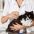 gato · peluquero · salón · veterinario · clínica - foto stock © fotoedu