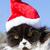 beautiful cat with christmas cap stock photo © fotoedu