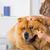 ветеринарный · клинике · глазах · собака · стороны · глаза - Сток-фото © fotoedu