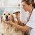 veterinário · clínica · olhos · cão · golden · retriever · mão - foto stock © fotoedu