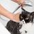 кошки · жемчужная · ванна · небольшой · серый · воды - Сток-фото © fotoedu