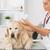 veterinário · clínica · limpeza · cão · golden · retriever - foto stock © fotoedu
