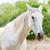 close up of a white horse stock photo © fotoedu