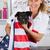 veterinário · cão · americano · veterinário · bandeira · americana · sorrir - foto stock © fotoedu