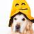 díszállat · sütőtök · halloween · halloween · tök · fehér · kutya - stock fotó © fotoedu