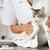 gato · peluquero · veterinario · clínica · belleza · atención - foto stock © fotoedu