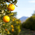 naranjas · mediterráneo · mercado · mandarina · naturaleza · salud - foto stock © fotoedu