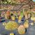 variety of different cactus stock photo © fotoedu