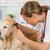 ветеринарный · клинике · уха · врач - Сток-фото © fotoedu