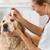 veterinário · clínica · poucos · gotas · olho · cão - foto stock © fotoedu