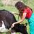 veterinário · fazenda · esquadrinhar · jovem - foto stock © fotoedu