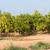 narancsfa · gyümölcs · virág · szelektív · fókusz · narancs · zöld - stock fotó © fotoedu
