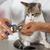 gato · peluquero · veterinario · clínica · unas - foto stock © fotoedu
