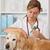 veterinário · clínica · golden · retriever · consulta · médico · hospital - foto stock © fotoedu