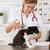 veterinário · clínica · gatinho · vacina · injeção · gato - foto stock © fotoedu