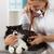 veterinário · escuta · gato · doente · gatinho - foto stock © fotoedu