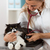 veterinario · escuchar · gato · realizar · enfermos · gatito - foto stock © fotoedu