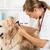 veterinário · clínica · ouvido · dourado · médico - foto stock © fotoedu