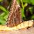 azul · borboleta · asas · branco · de · volta · sombra - foto stock © fotoedu