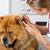 ветеринарный · клинике · уха · врач · больницу - Сток-фото © fotoedu