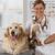 veterinário · clínica · consulta · golden · retriever · cão · gato - foto stock © fotoedu