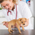 veterinario · cachorro · veterinario · toma · temperatura · médico - foto stock © fotoedu