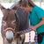 Veterinary in the farm stock photo © fotoedu