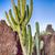 választék · különböző · kaktusz · kitettség · nap · sivatag - stock fotó © fotoedu
