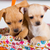 группа · белый · цветок · кошки · собаки - Сток-фото © fotoedu