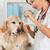 escuta · cão · veterinário · dourado · golden · retriever · clínica - foto stock © fotoedu
