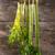 свежие · сельдерей · продукт · саду · готовый · продовольствие - Сток-фото © Fotografiche