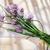 çiçeklenme · zaman · yaratıcı · pişirme · otlar - stok fotoğraf © Fotografiche