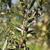 zeytin · hasat · arazi · akdeniz · gıda · doğa - stok fotoğraf © Fotografiche
