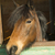 eski · kararlı · atlar · at · barınak · boyalı - stok fotoğraf © Fotografiche
