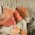 効果 · 古い · 壁 · 住宅の - ストックフォト © Fotografiche