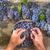 nero · uve · tardi · estate · frutti - foto d'archivio © Fotografiche