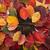 yaprakları · trabzon · hurması · halı · renkler · tipik - stok fotoğraf © Fotografiche