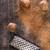 szerecsendió · részlet · rrácsozat · íz · egyedi · különleges - stock fotó © Fotografiche