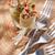 wołowiny · sos · pomidorowy · obiedzie · makaronu · pomidorów · posiłek - zdjęcia stock © fotografiche