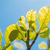 小さな · 春 · 葉 · 空 · 青空 · コピースペース - ストックフォト © fotoquique